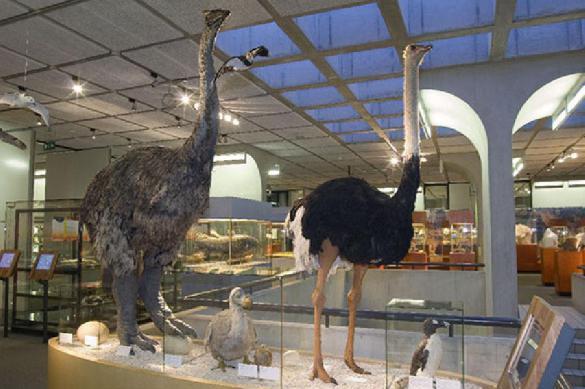 Ученые рассказали о самой большой и страшной птице на Земле. 392387.jpeg