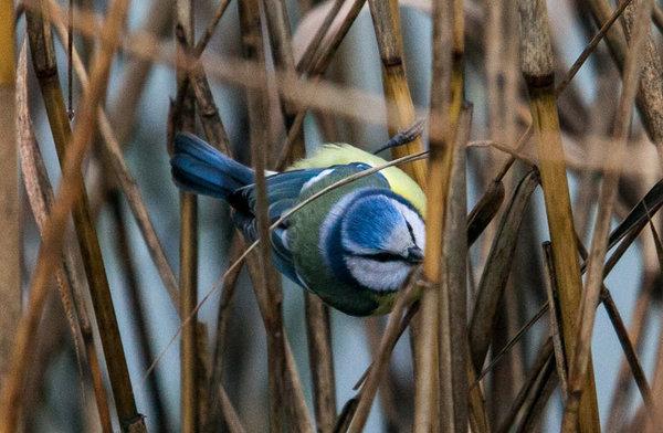 Птицы тоже умеют веселиться - ученые. 307388.jpeg
