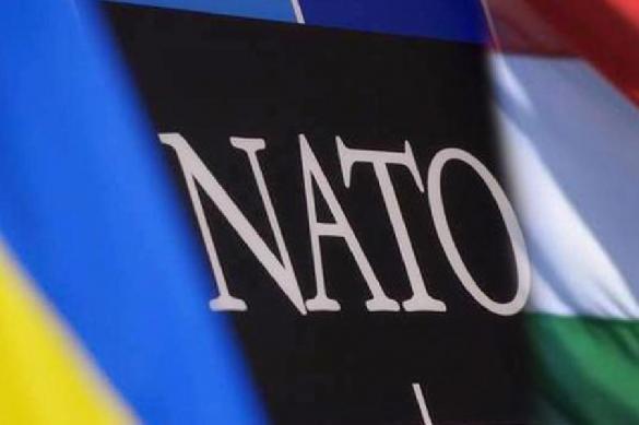 Венгрия против сближения Украины с НАТО. 389388.jpeg