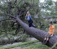 Сломанное ураганом дерево задавило мальчика в Подмосковье