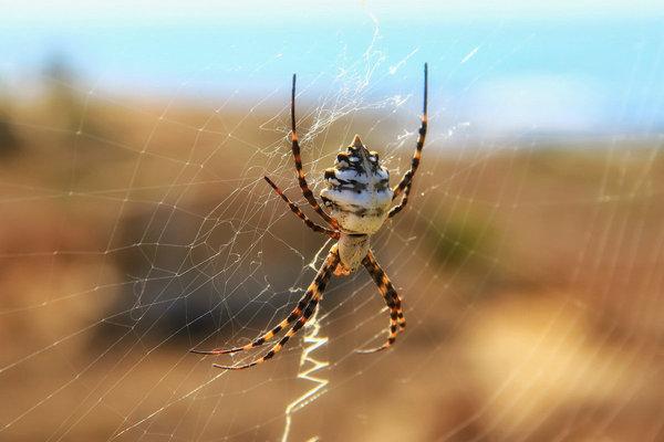 Арахнофобия: почему мы боимся пауков. арахнофобия