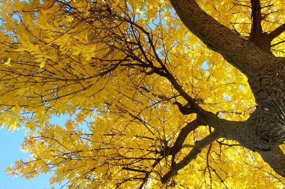 О чем молчат самые древние в мире деревья. 395391.jpeg