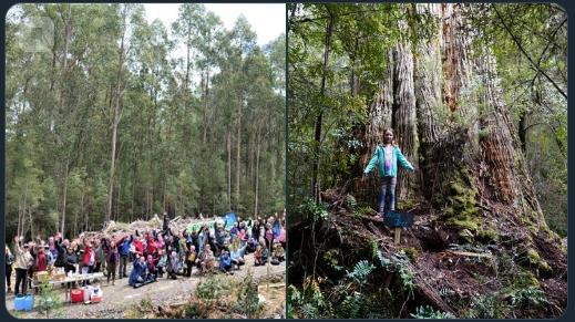 В Австралии аборигены протестуют против уничтожения священных деревьев. австралия