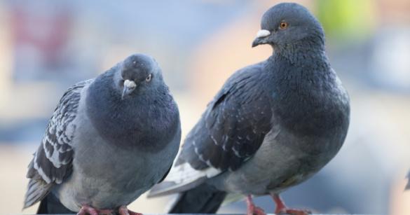 Жителям Магадана хотят запретить кормить голубей. 394392.jpeg