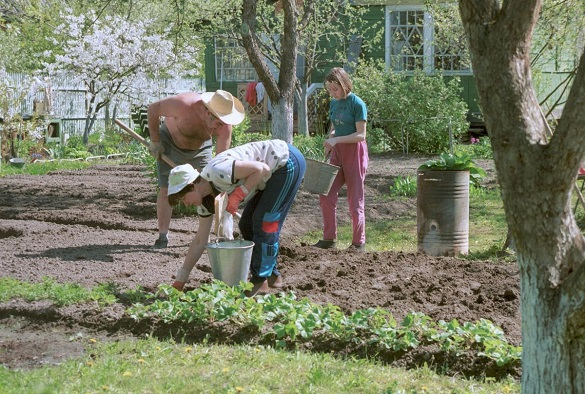 Что изменит в жизни российских садоводов в 2019 года