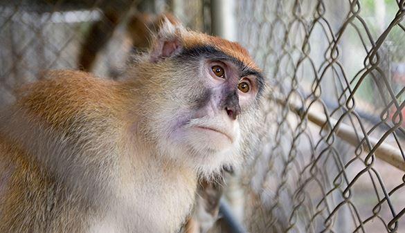 Российские ученые доказали, что одомашнить можно любое животное