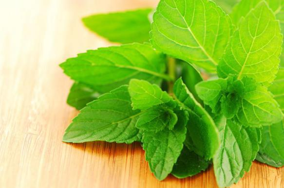 Аптекарский огород: лекарственные растения, которые можно вырастить на даче. 392399.jpeg