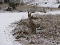 В Австралию досрочно пришла зима