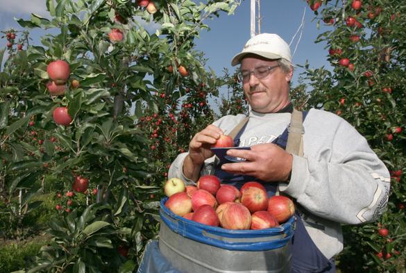 Молдавские фермеры угрожают властям вырубкой садов.