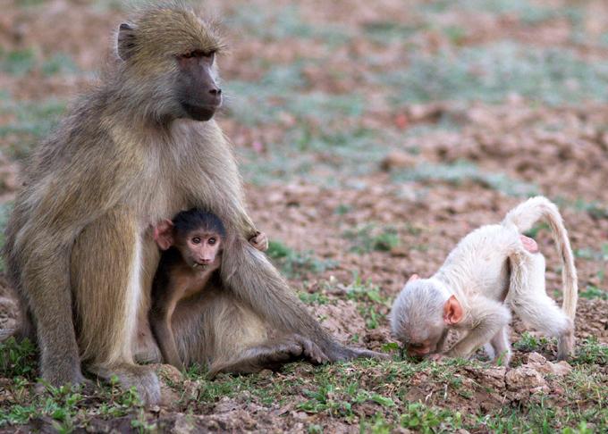 Зоологи составили список самых умных животных