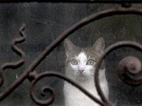 В бразильской тюрьме поман кот-контрабандист. 278408.jpeg
