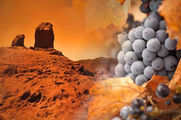 Грузия включилась в освоение космоса, предложив выращивать виноград на Марсе. 388409.jpeg
