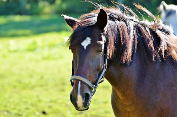 Выставка последних достижений мировой конной индустрии. 397409.jpeg