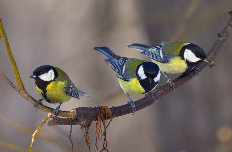 В Подмосковье зафиксирована массовая гибель птиц. В Подмосковье зафиксирована массовая гибель птиц