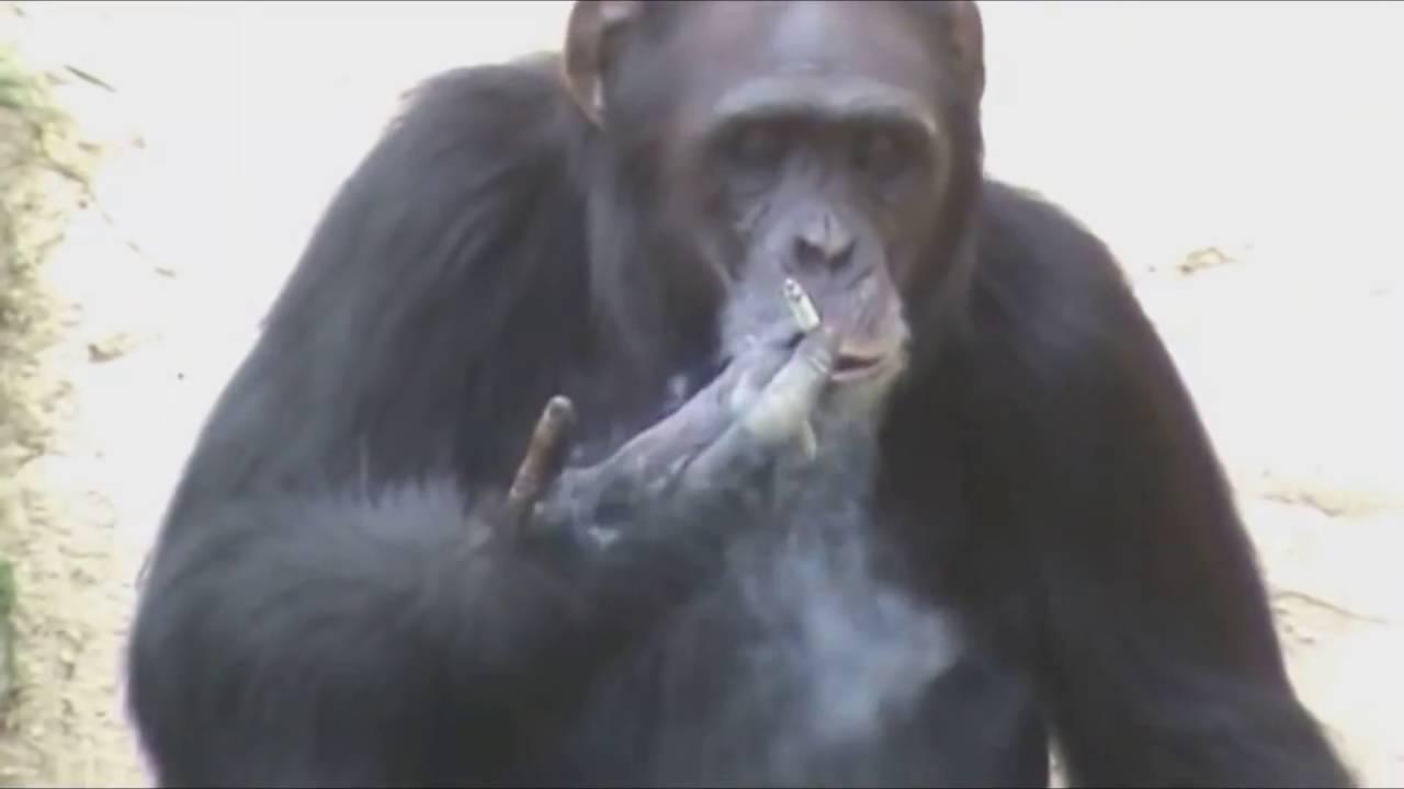 Странное поведение животных, о которых вы могли не знать. 404411.jpeg