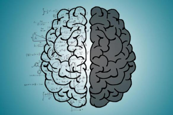 Продолжительность жизни связали с количеством нейронов в мозге. 394412.jpeg