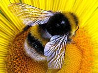 Пчелы из Версальского дворца выдали первый центнер меда