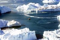 В Арктике растаяла половина дрейфующих льдов