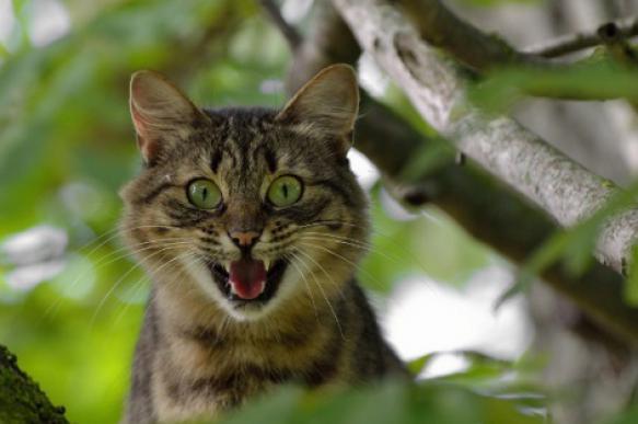 Странное поведение вашей кошки: как расшифровать. 397422.jpeg
