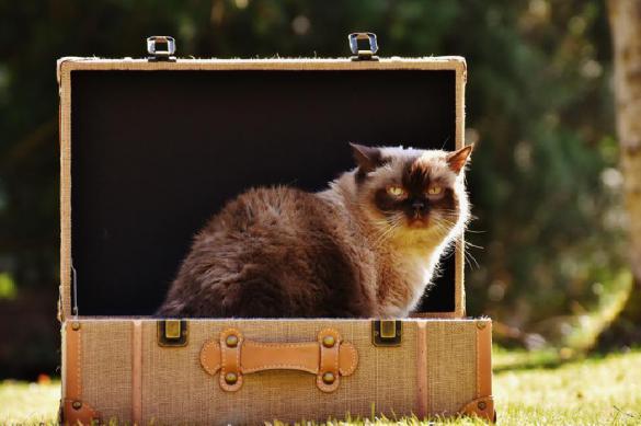 Авиакомпании признались животные умирают в багаже