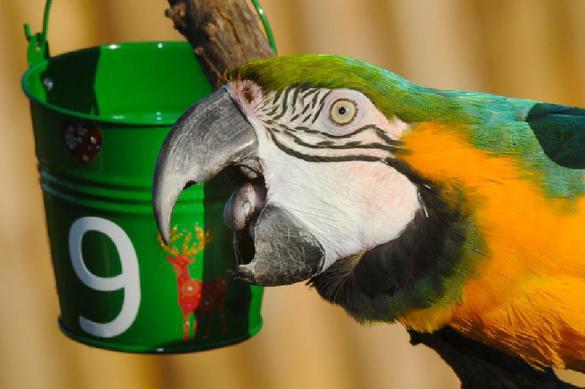 А поговорить: как сделать собеседника из волнистого попугайчика. 395426.jpeg