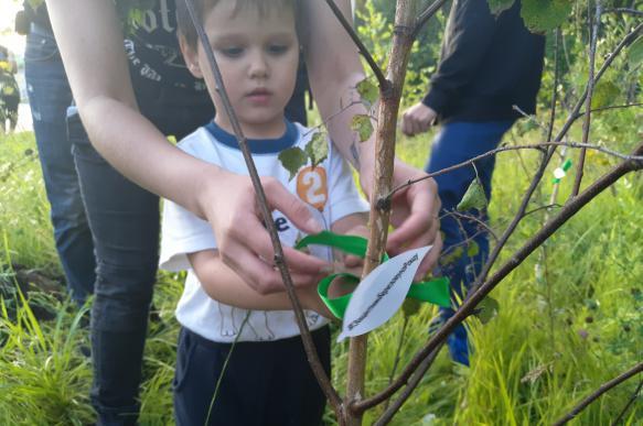 В Екатеринбурге вопреки воле жителей пытаются вырубить березовую рощу. 390429.jpeg