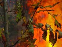 Забайкальская тайга охвачена огнем