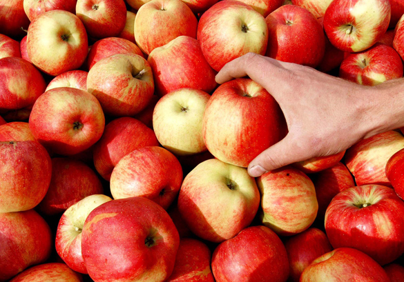 Польша заваливает аграрную Украину своими невостребованными яблоками. яблоки