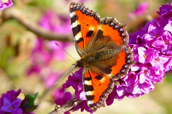 Ученые отыскали бабочек, самцы исамки которых видят мир по-разному