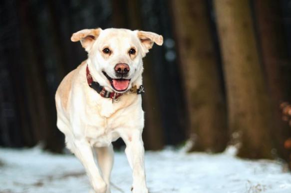 Как ухаживать за собакой в зимний период. 395438.jpeg