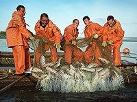 На Сахалине готовятся установить рыболовный рекорд