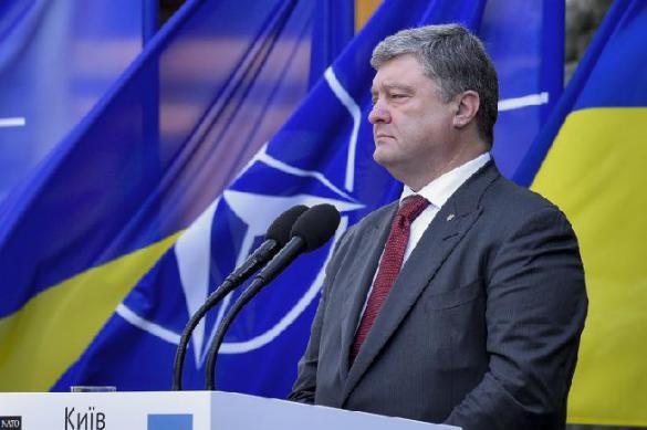 Украина готовится поклониться НАТО. 388439.jpeg