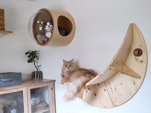 Разработаны инновационные кровати для кошек. 393440.jpeg