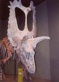 Динозаврам предстоит тотальная ревизия