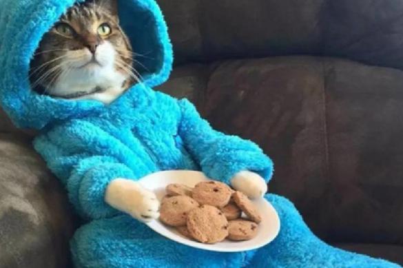 Посольство США по ошибке разослало всем кота в пижаме. 393441.jpeg