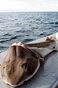 И люди сыты, и акулы целы