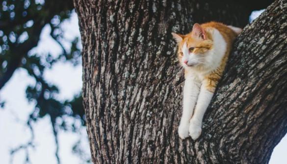 В Петрозаводске спасли кота