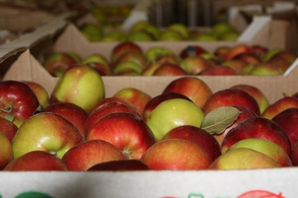 Как сохранить яблоки зимой. 393451.jpeg