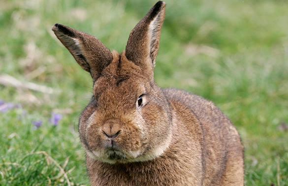 Европейский радиоведущий забил крольчонка насосом в прямом эфире. кролик