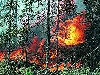 В Италии зарегистрировано уже более 40 лесных пожаров