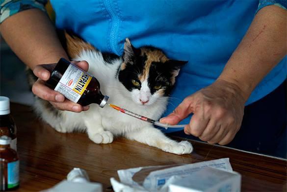 На лечение истерзанного живодером котенка собрали 15 000 долларов. 315460.jpeg