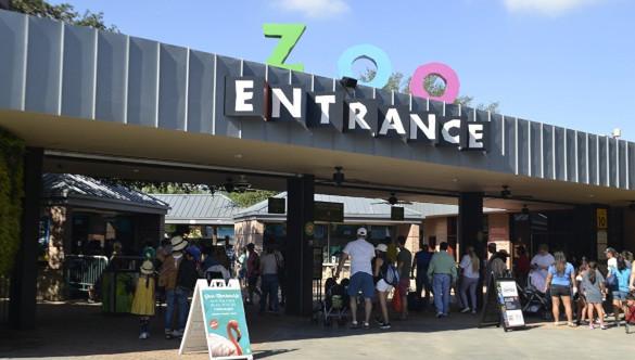 Шимпанзе в зоопарке Хьюстона спровоцировала эвакуацию. 394462.jpeg
