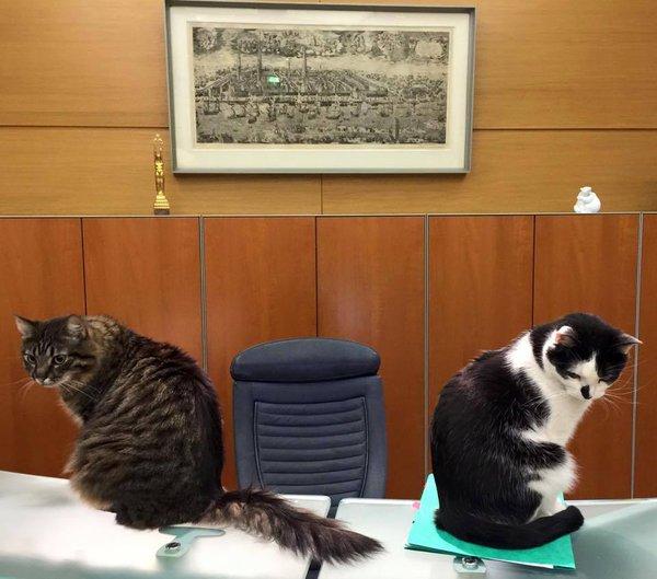 Мэр Риги: Напишу жалобу на думских котов, чтобы в Центре Госязыка не скучали. Два думских кота