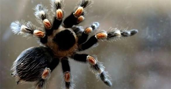 Тропический паук с Бали