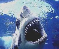 Изучить белых акул ученым помогли криминалисты