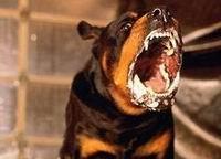 Владельцы бойцовых собак ответят за своих питомцев?