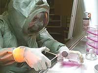 Врачи выяснили, с чего в Китае началась вспышка чумы