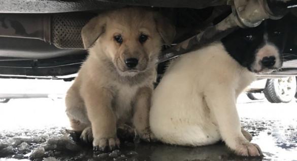 В Калуге спасли двух щенков. 394466.jpeg