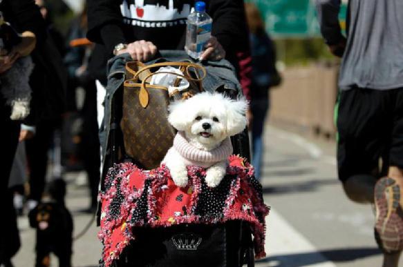 Прогулка с собакой: опасностей все больше. 402466.jpeg