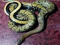 Пенсионерка с ужасом обнаружила в своей квартире змею